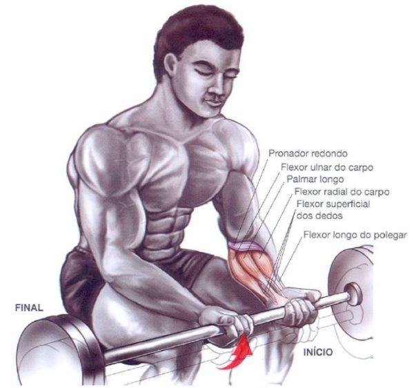 antebraços-exercicio