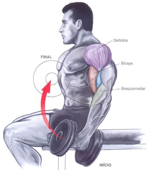biceps halteres