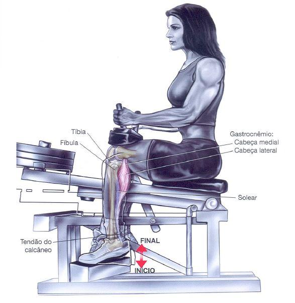 musculo gemeos