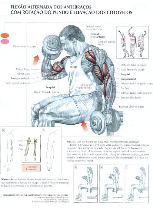 ganhar massa muscular nos Biceps