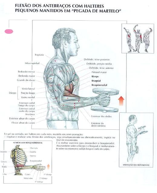 biceps fortes