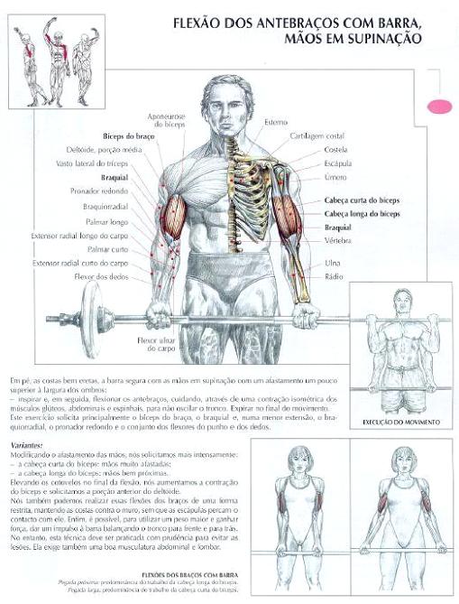dicas para malhar aumentar biceps