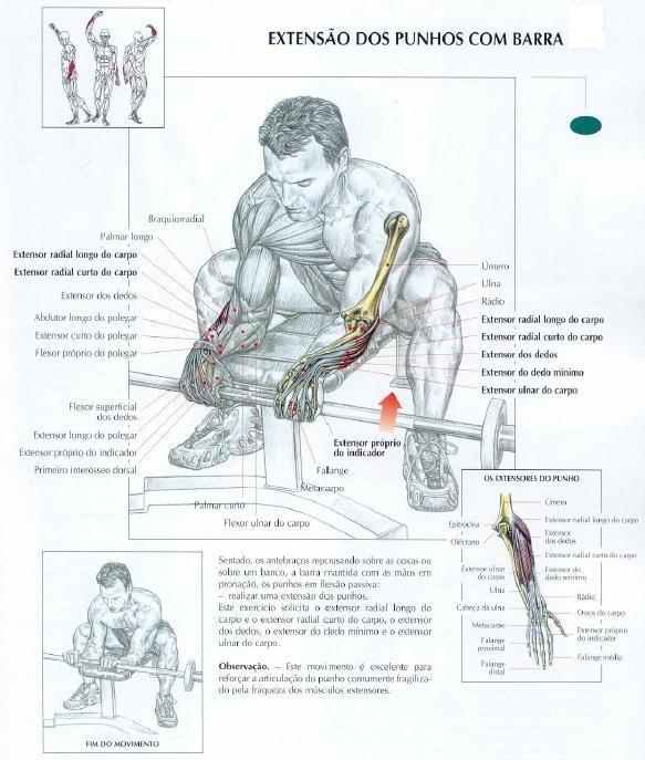 massa muscular antebraços