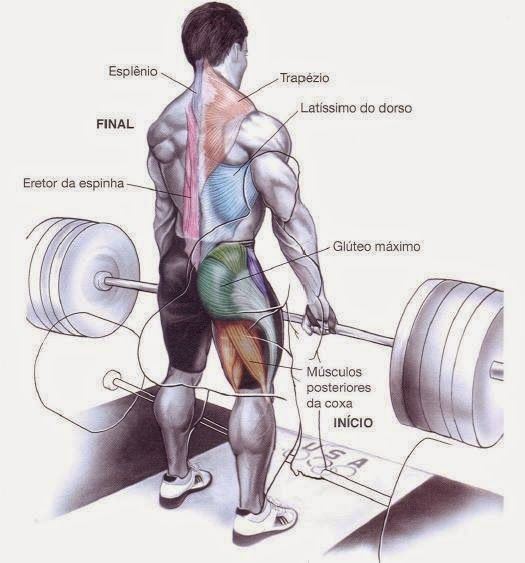 Conhecido Hipertrofia Muscular rapida – Exercicios treino WK91